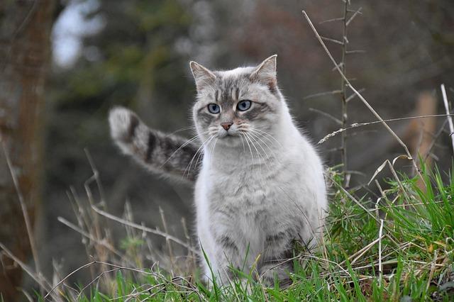 female-russian-cat-names