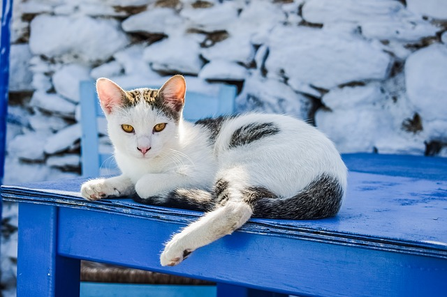 female-summer-cat-names