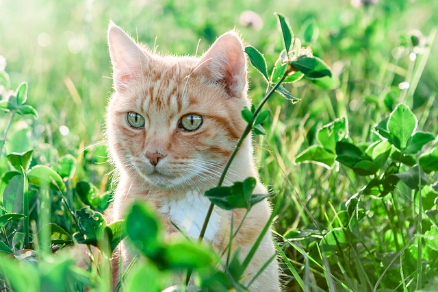 unisex-summer-cat-names
