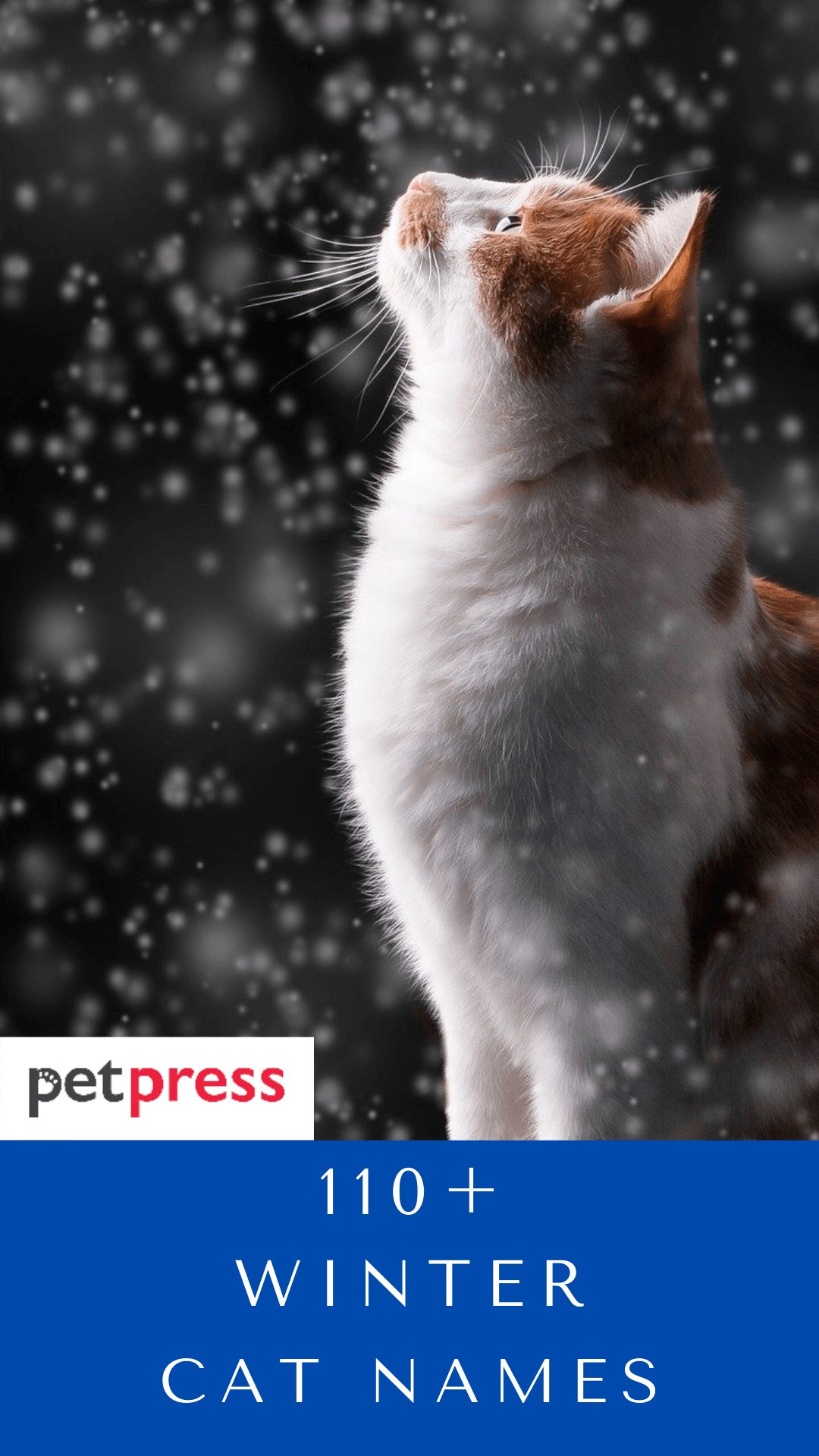 winter-cat-names