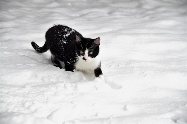 female-winter-cat-names