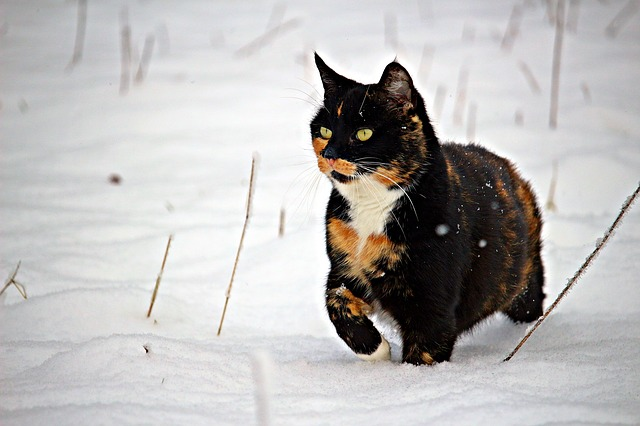 male-winter-cat-names