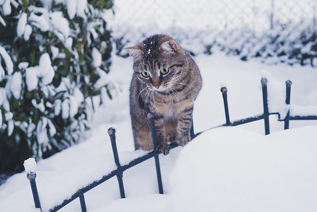unisex-winter-cat-names