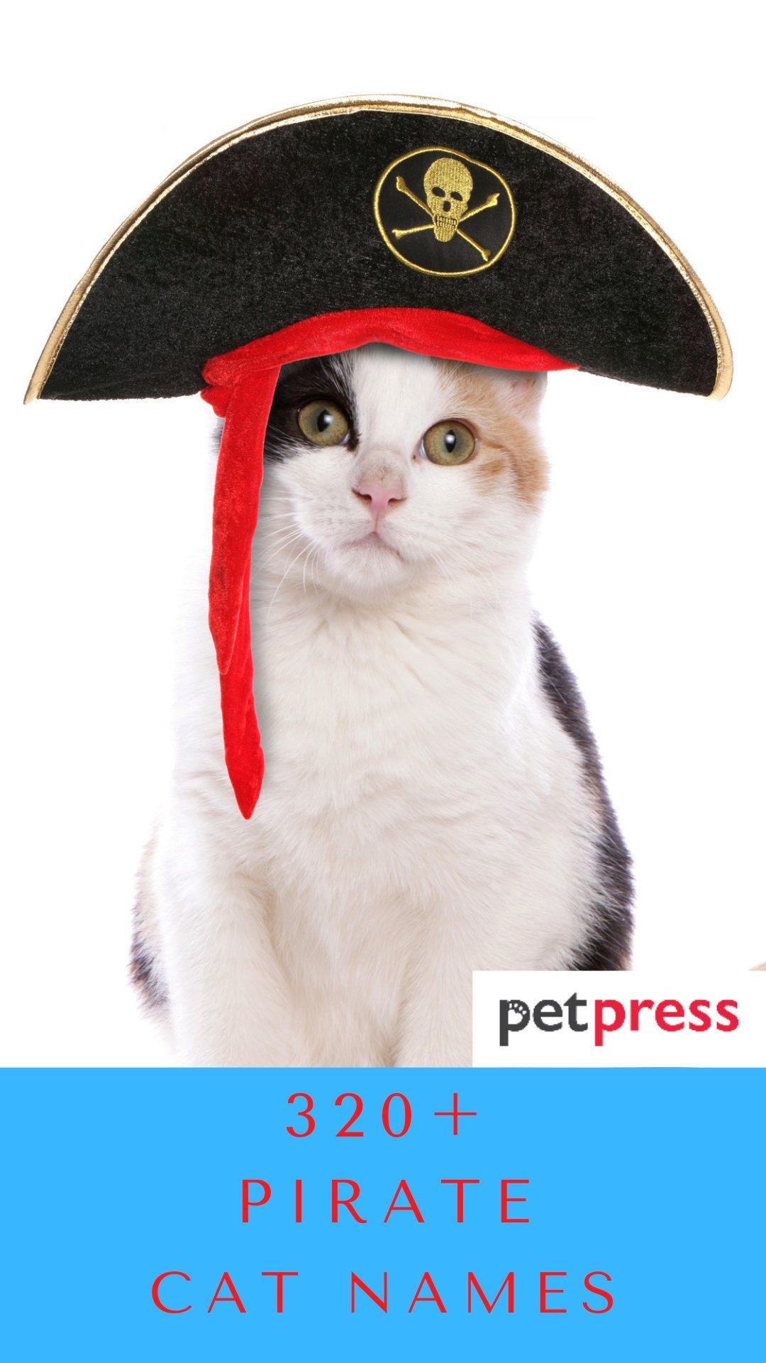 pirate-cat-names