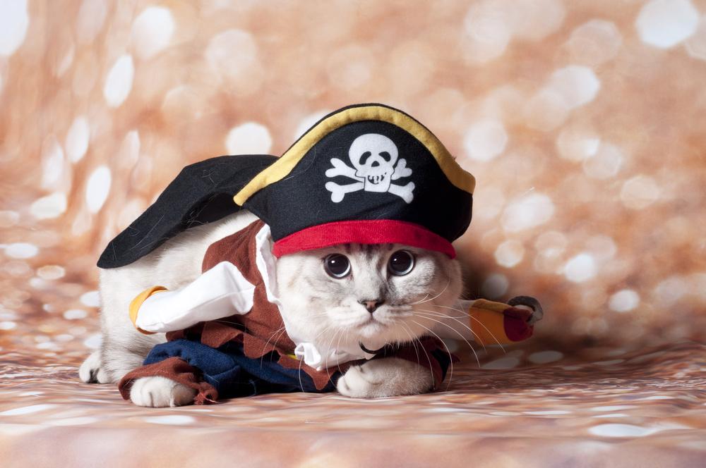 female-pirate-cat-names
