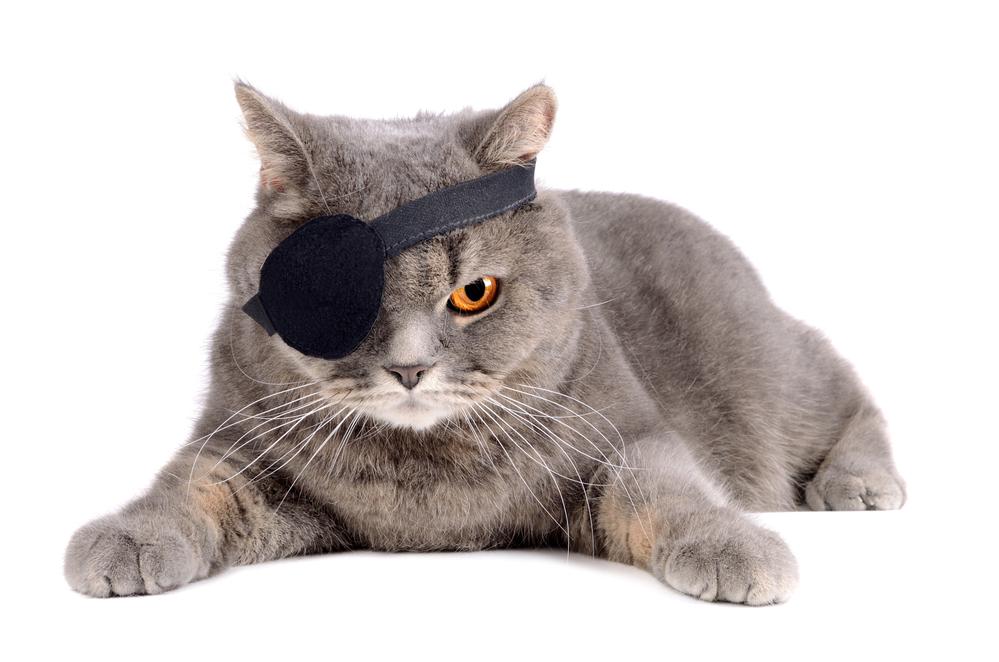 male-pirate-cat-names