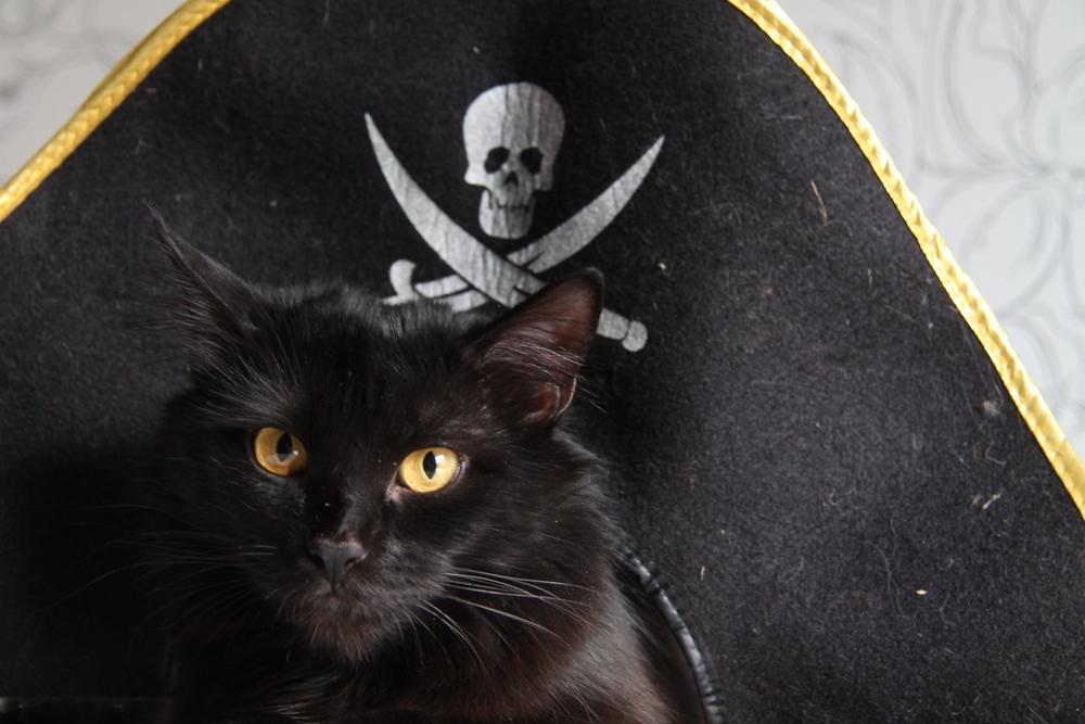 unique-pirate-cat-names
