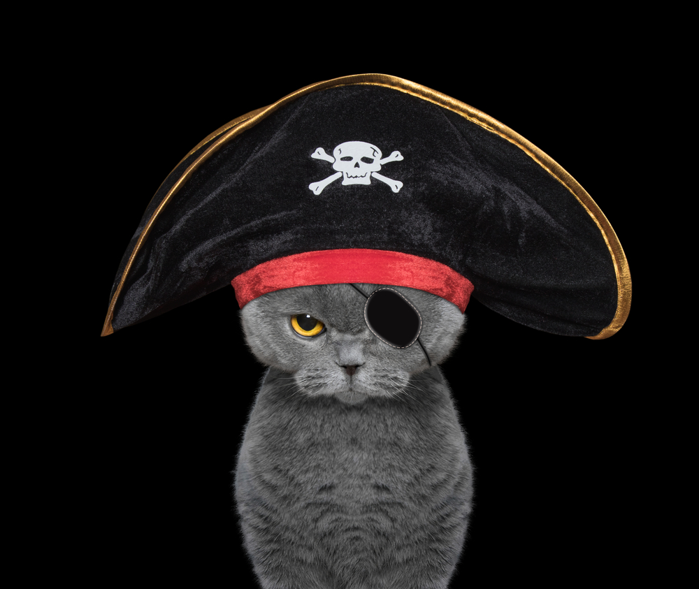 cute cat in a pirate costume