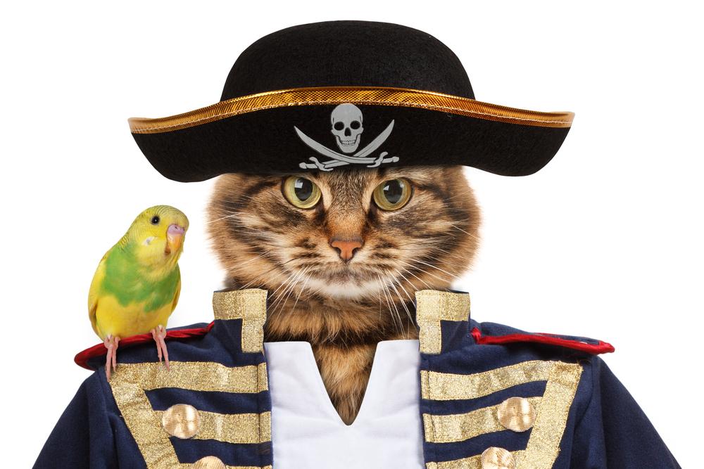 funny-pirate-cat-names