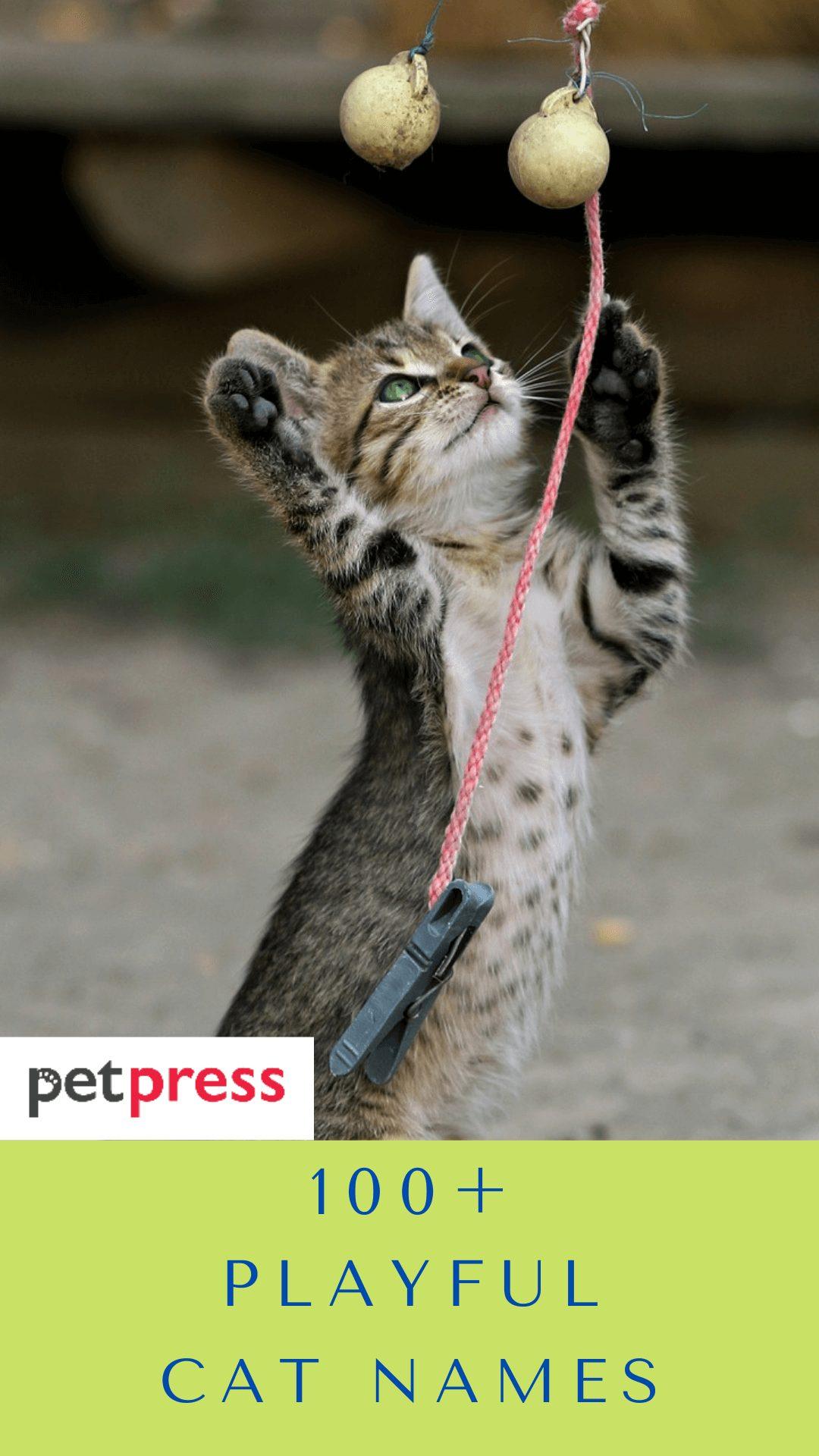 playful-cat-names