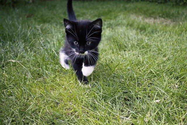 cute-playful-cat-names