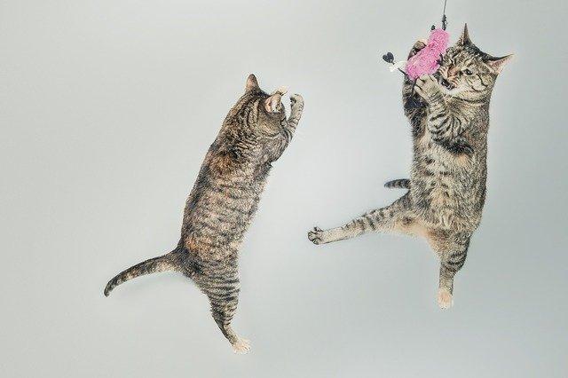 unique-playful-cat-names