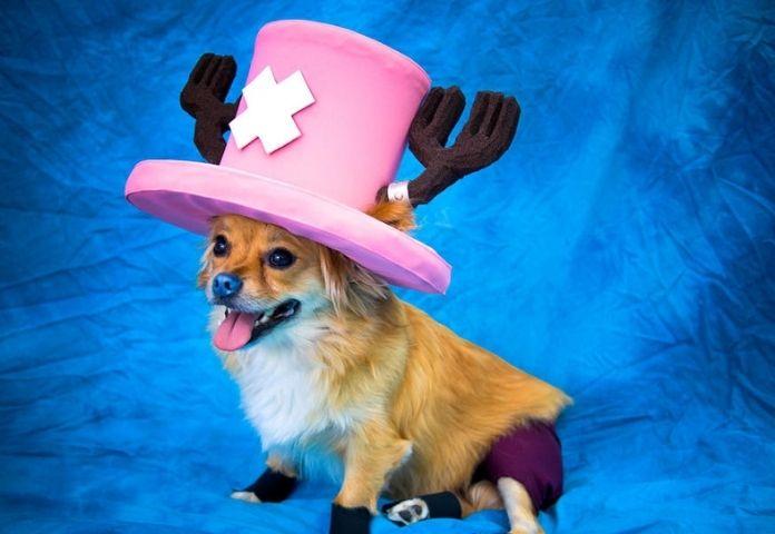 One Piece Female Dog Names