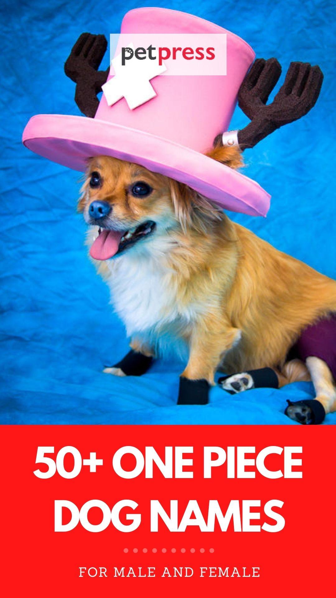 one piece dog names