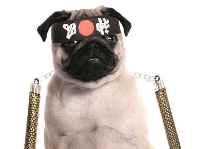 Popular Ninja Dog Names