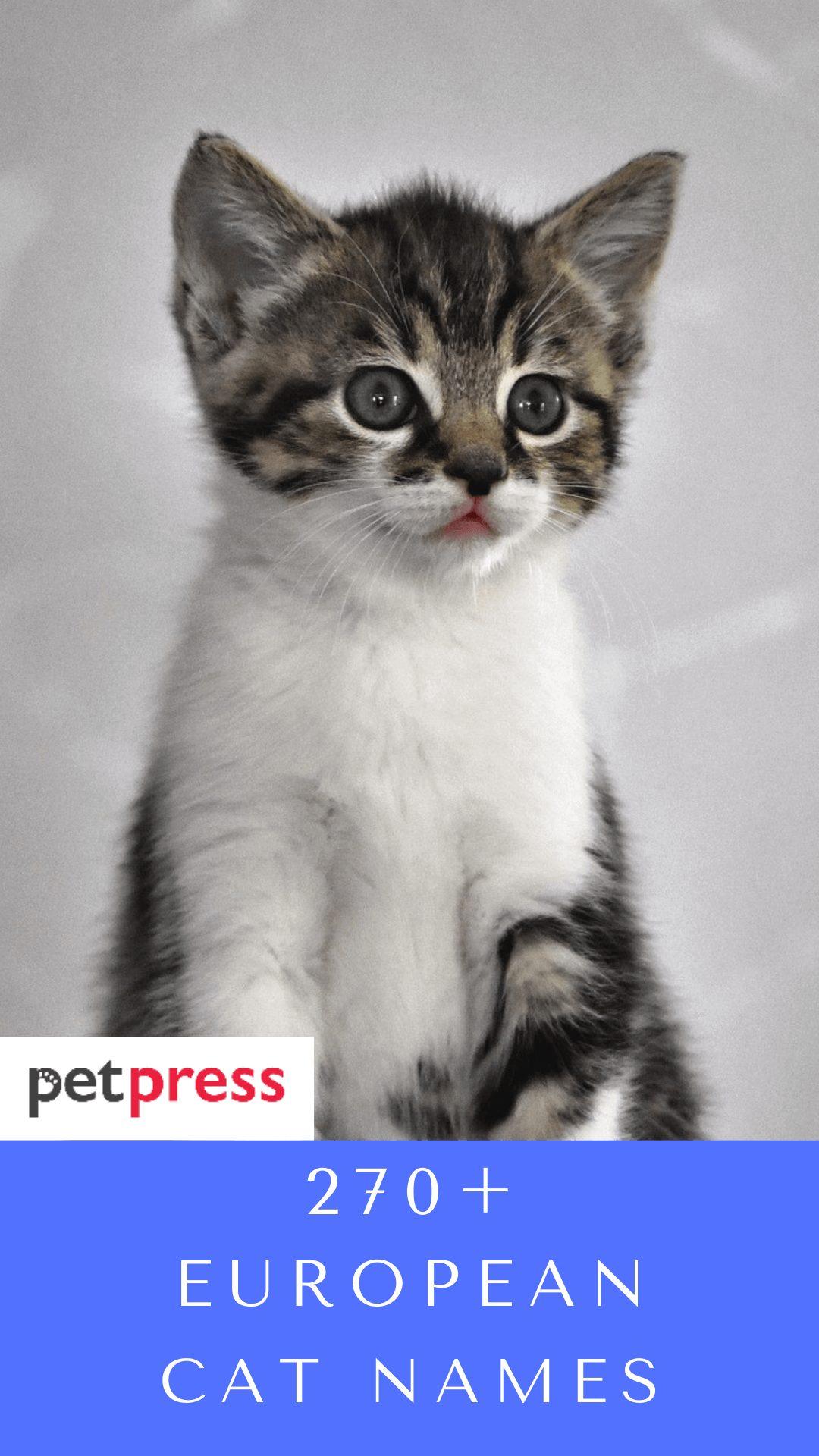 european-cat-names