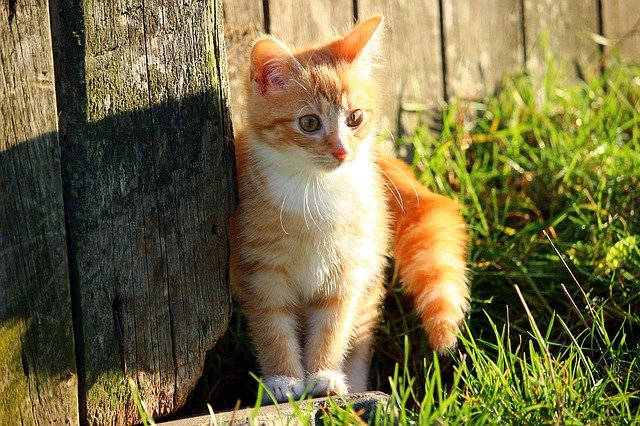 european-cat-names-01