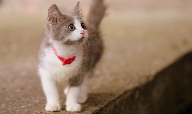 european-cat-names-02