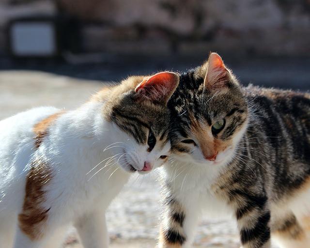 european-cat-names-03