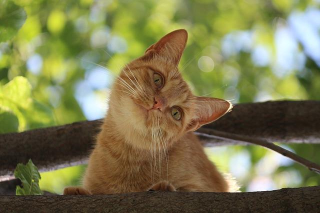 european-cat-names-04