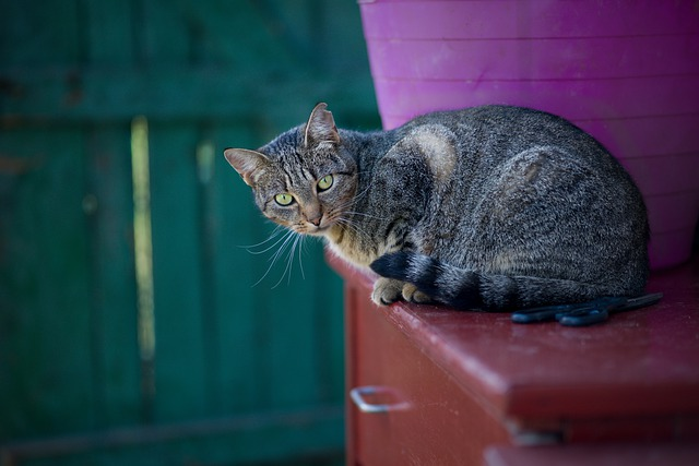 welsh-male-cat-names