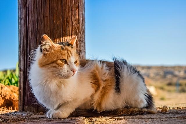 female-welsh-cat-names