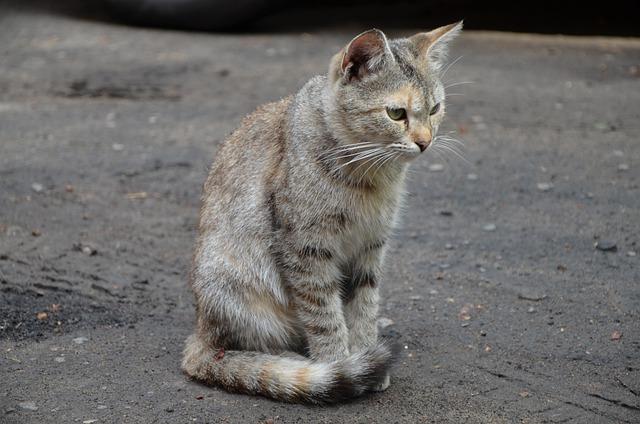 unique-welsh-cat-names