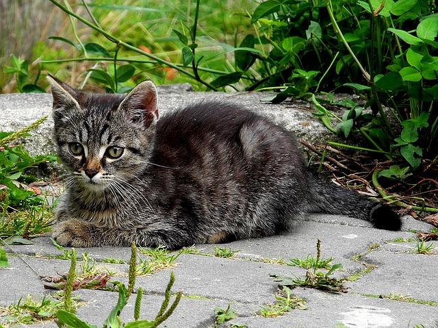 female-aztec-cat-names