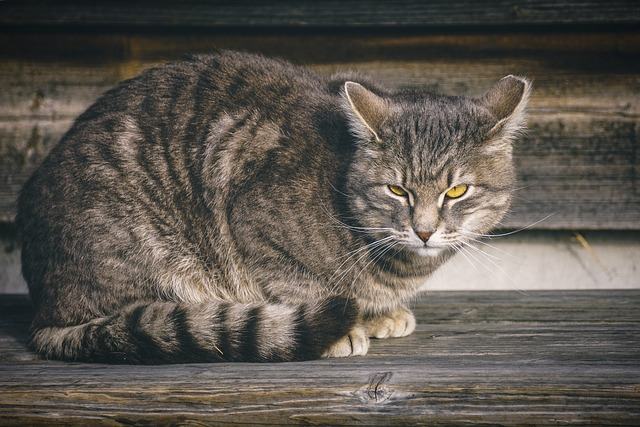 male-mayan-cat-names
