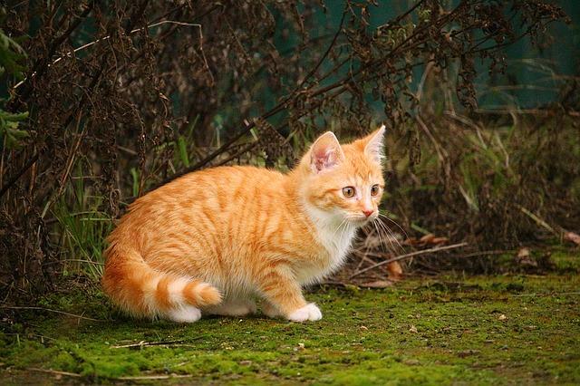 female-mayan-cat-names