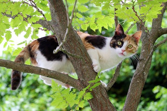 unisex-mayan-cat-names