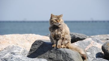 unique-surfer-cat-names