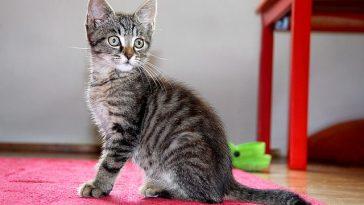 female-portuguese-cat-names