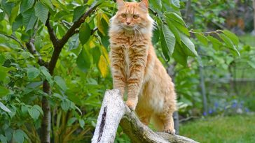 male-brazilian-cat-names