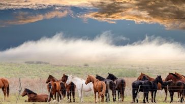 Turkoman Horse Names - List of 120+ Famous Names For A Turkoman Horse