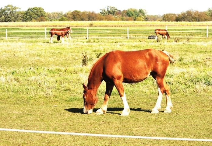 Female Turkoman Horse Names