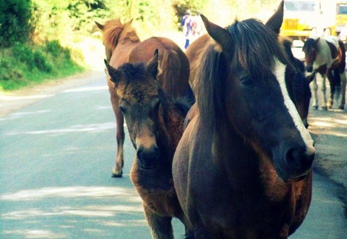 Best Turkoman Horse Names