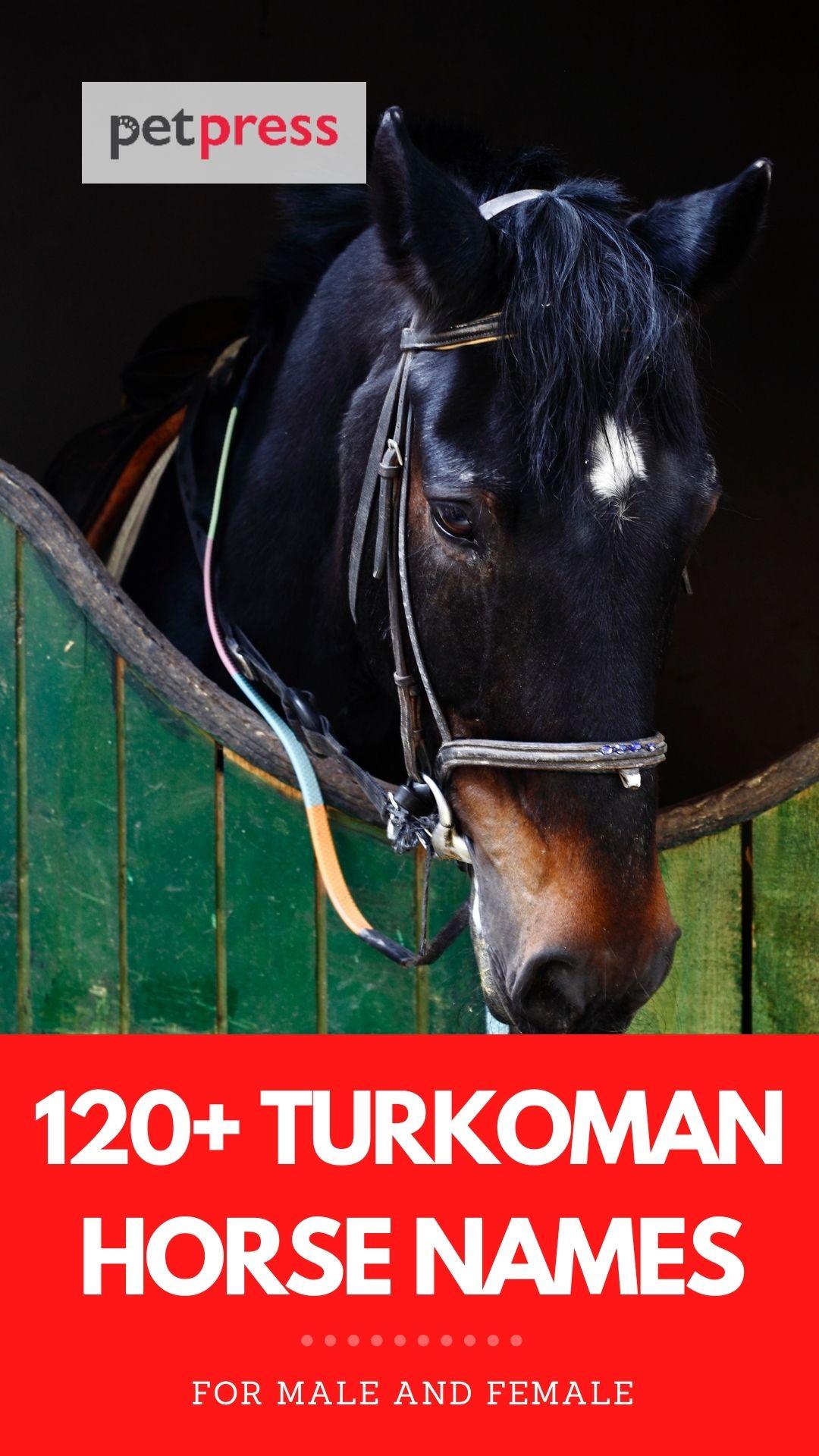 turkoman horse names