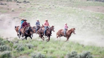 Best Ranch Horse Names - List of 250+ Good Horse Ranch Names