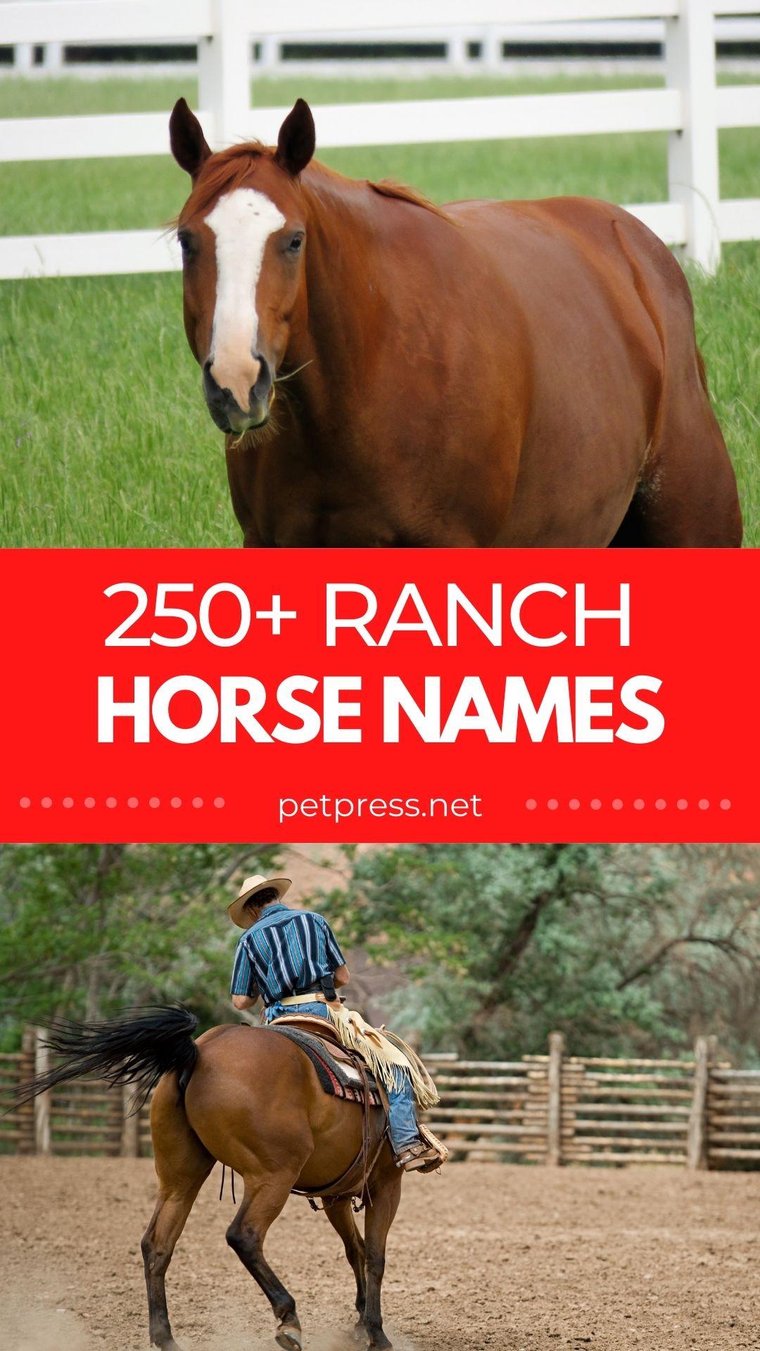 ranch horse names