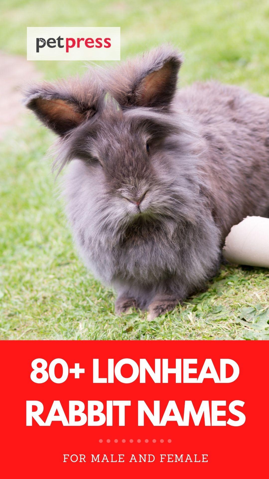 lionhead rabbit names