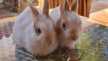 The Ultimate List of 90+ Best Spanish Rabbit Names