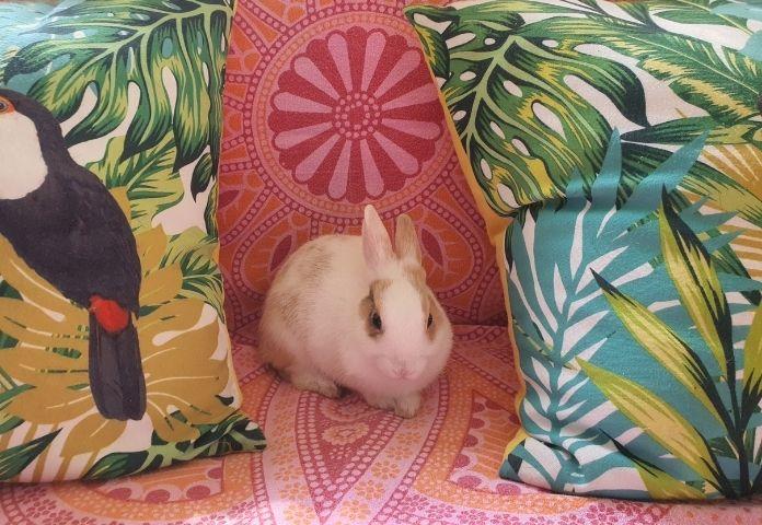Best Spanish Rabbit Names