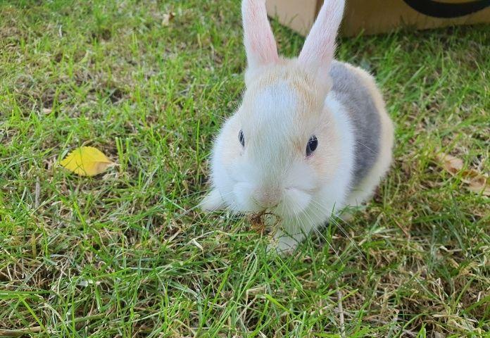 Male Spanish Rabbit Names