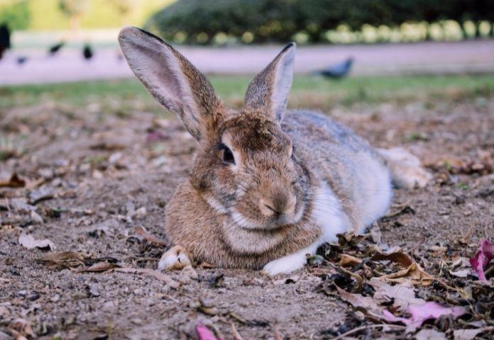 Funny Spanish Rabbit Names