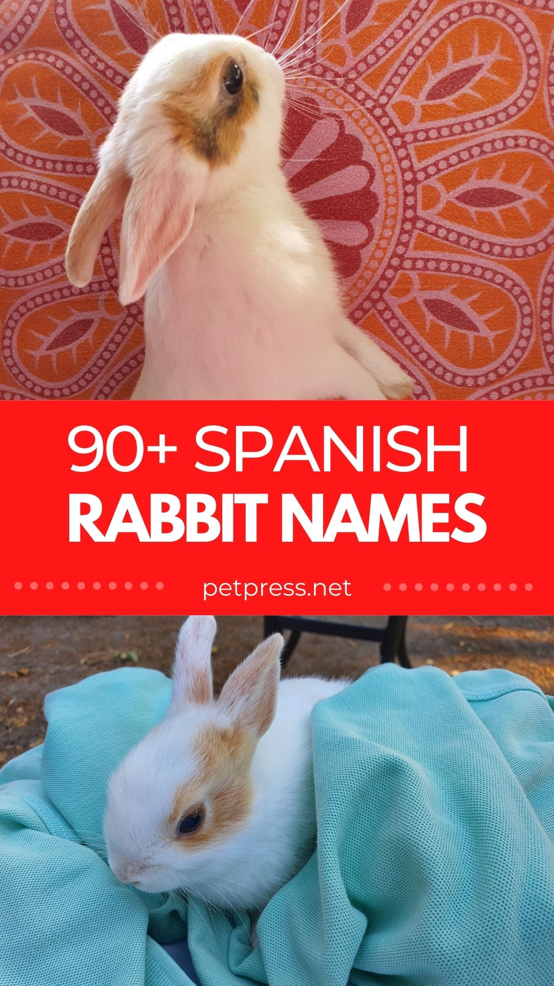 spanish rabbit names