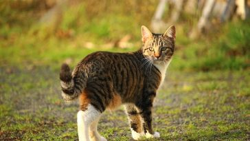 male-spring-cat-names