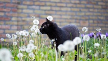 female-badass-black-cat-names
