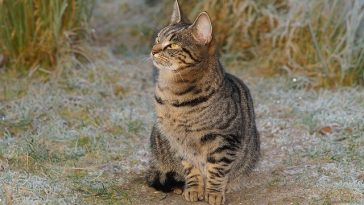 male-feisty-cat-names