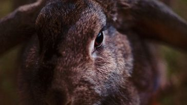 100+ Best Brown Rabbit Names - Cute and Funny Pet Bunny Name Ideas